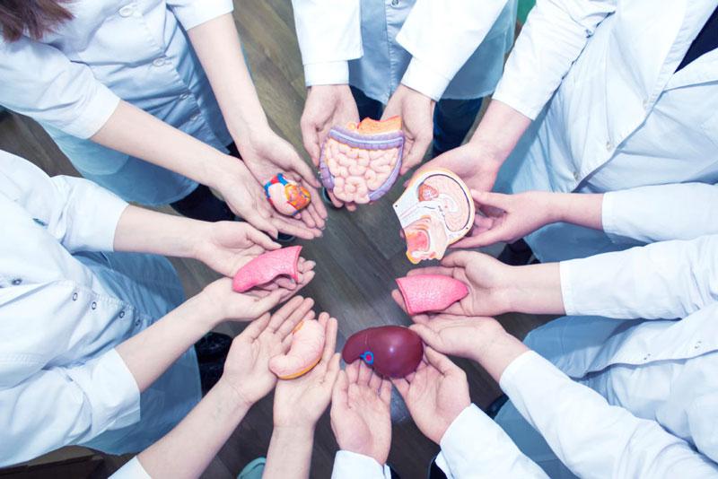 Trasplante renal urólogo en Valencia